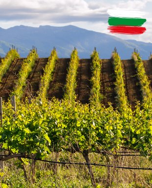 Bulgaria, although far behind in the ranking of the most famous or prestigious wine producers, certainly ranks among the most prolific and has one of the longest histories of viticulture and winemaking.