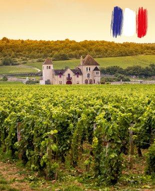 Франция е може би най-известната страна-винопроизводител в света. Много от нейните вина са моделите, на които други винари се опитват да подражават.