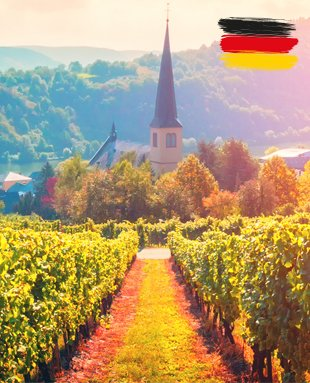 Germany has one of the coldest, shortest growing seasons of all the major wine-growing regions. This is the reason why only a few grape varieties can reach a good ripeness.
