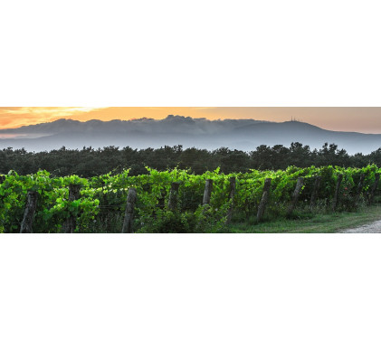 Франция и виното – традиция и тероар