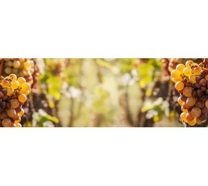 Десертни вина - Видове и специфики