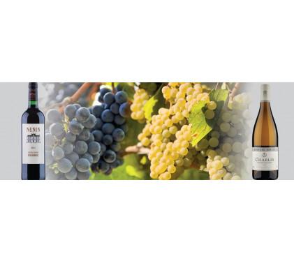 Шардоне & Мерло  Суперзвездите в света на виното
