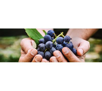 Натурално, биологично, биодинамично, занаятчийско вино: за какво говорим?