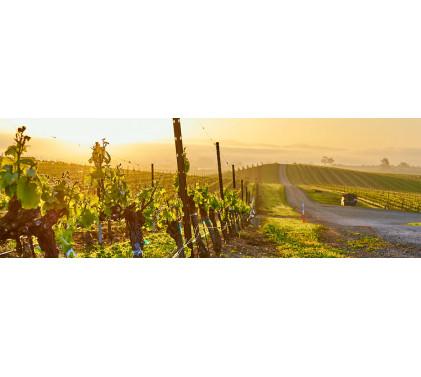 Слънчево Калифорнийско Вино