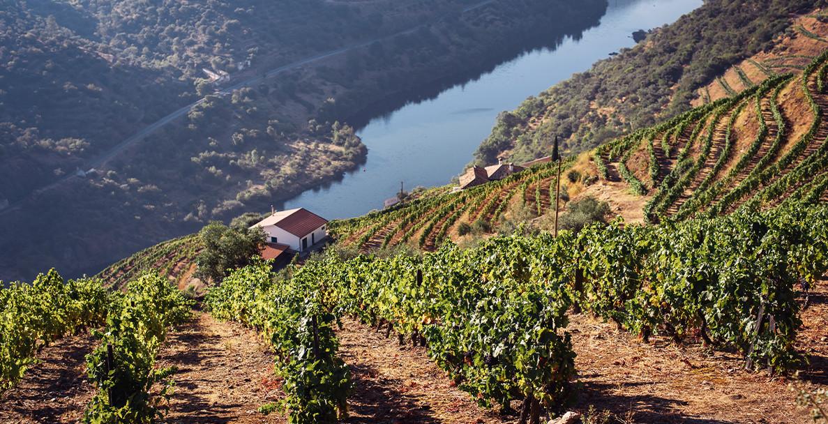 Дегустация: Палитра от сортове и вълнуващи вина от Португалия