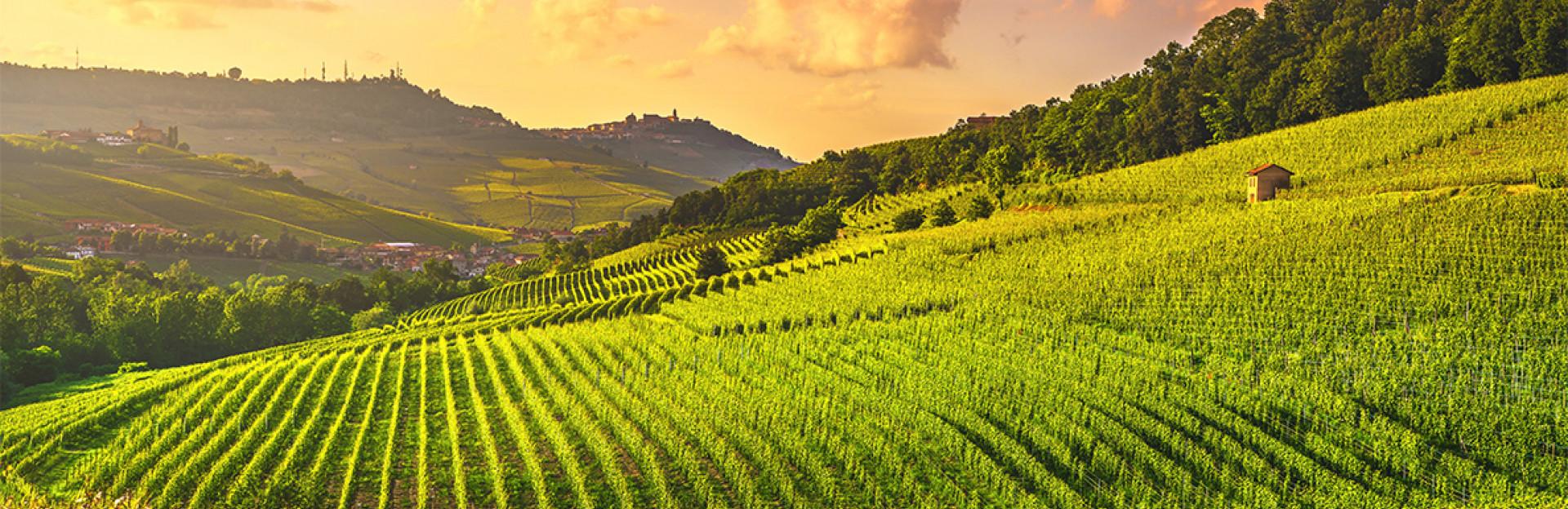 Дегустация: Изненадващи бели вина от Италия