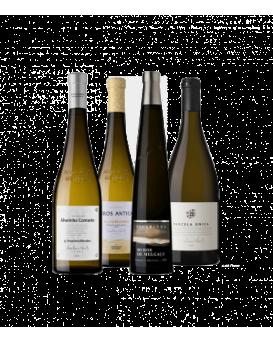 Селекция от 4 вина на Анселмо Мендеш
