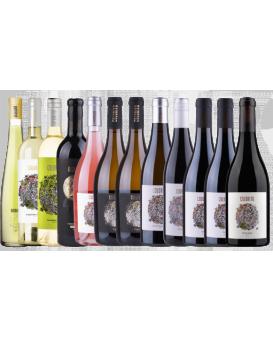 Комплект: 12 вина Колорито